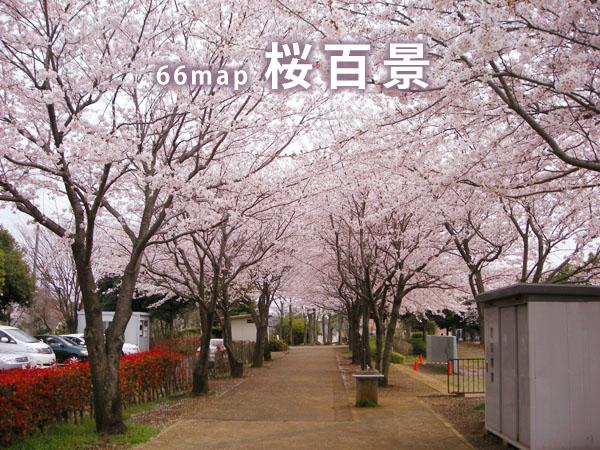 桜百景TOP