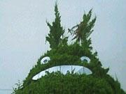 各地のトトロの木