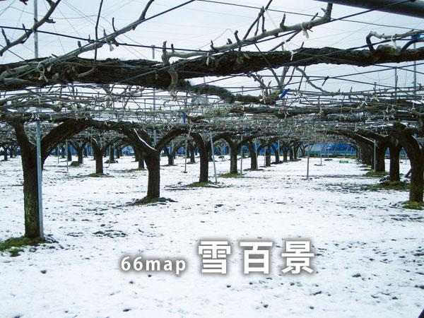 雪百景TOP